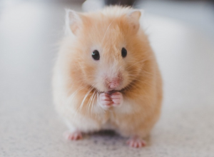 screen-shot-2016-11-28-at-3-34-54-pm